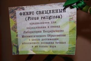 Ficus_opisanie